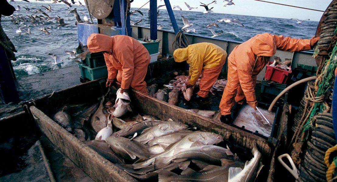 thủy hải sản canada
