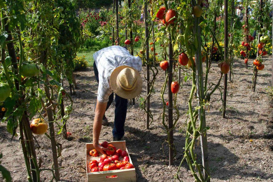 Người lao động phổ thông Canada, nhân viên nông trại