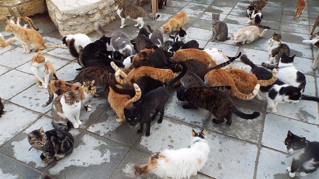 Khu bảo tồn mèo The Malcolm Cat Sanctuary.